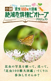 昆虫100種大図鑑「絶滅危惧種ビオトープ」プロジェクト